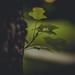 DSC_1857 by Into the dark