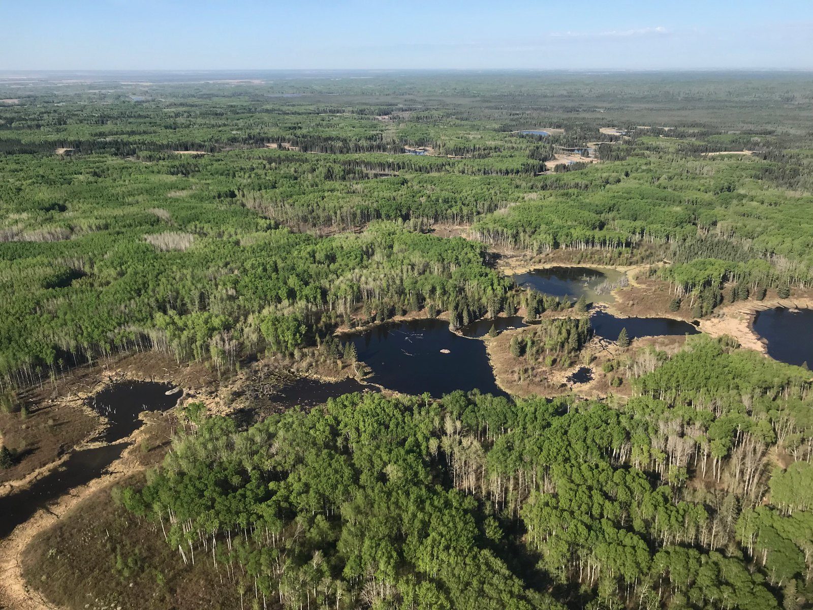 Parkland and boreal transition areas have the habitat for good waterfowl recruitment to occur. Photo Credit: P. Thorpe, USFWS