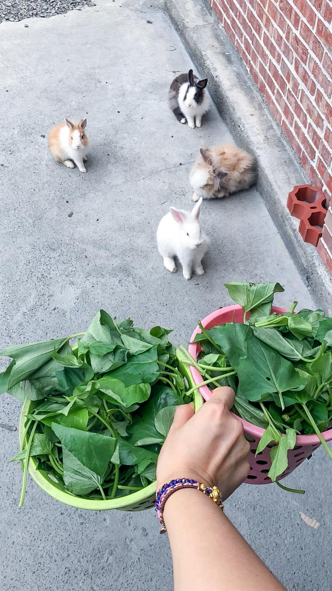 蕭家大院兔子寵物餐廳-5