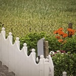 20180604-175709 - June Poppy Fence