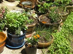 Planters 6/5/18