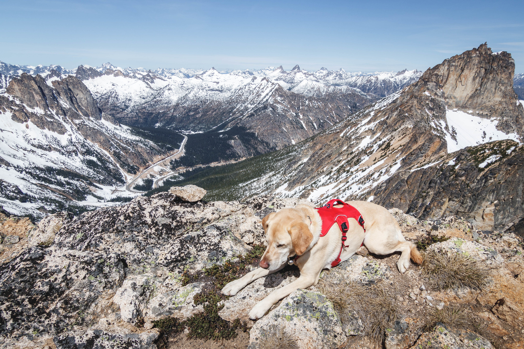 Summit dogs on Wallaby Peak