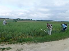 13 création d'un bouquet champêtre - Photo of Plaizac