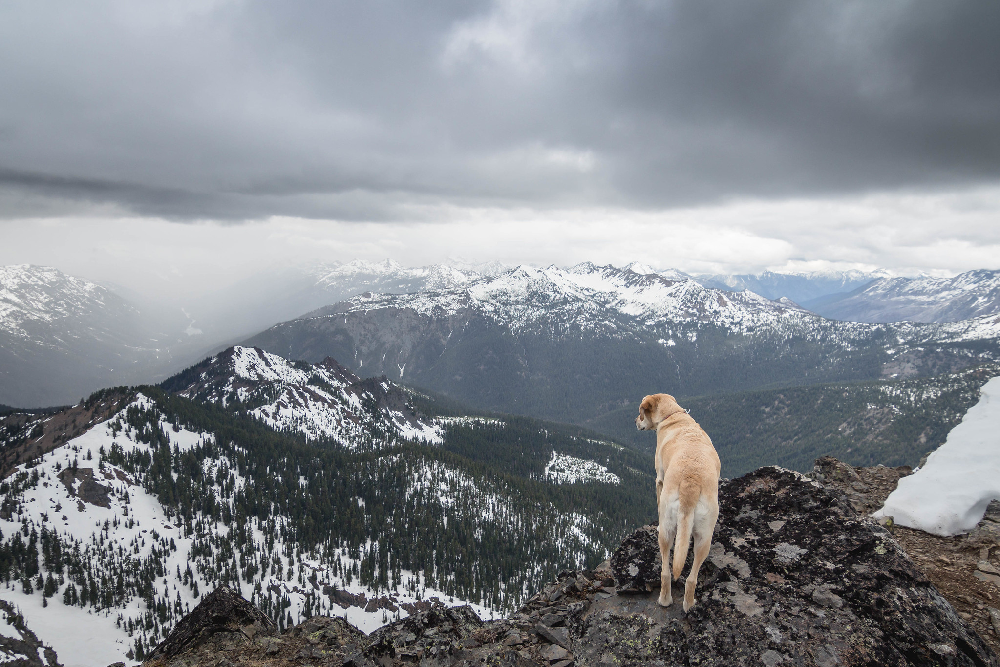 Summit dogs on Hawkins Mountain