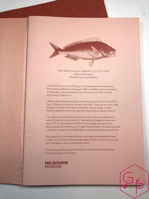 @MilligramStore Notebooks from Marc Martin Kaleidoscope Jungle & Melbourne Museum 9
