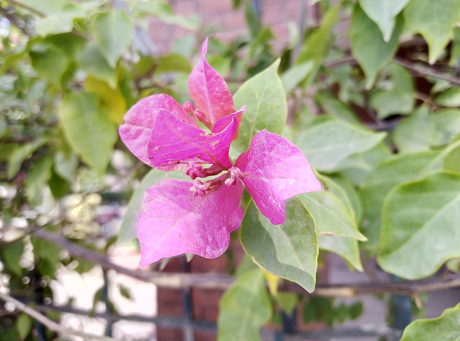 HDR Mode on Huawei Y5 Prime 2018 a