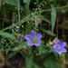 Esterel flowers by Sable Cloud