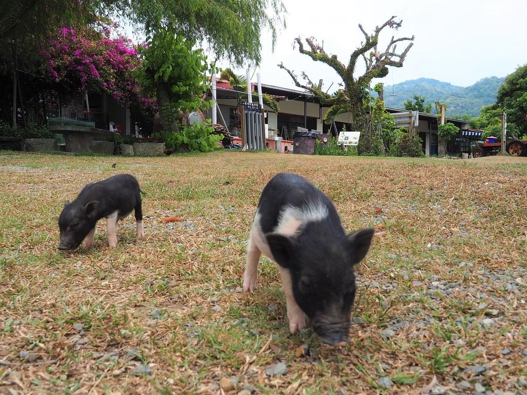 東山仙湖農場 (12)