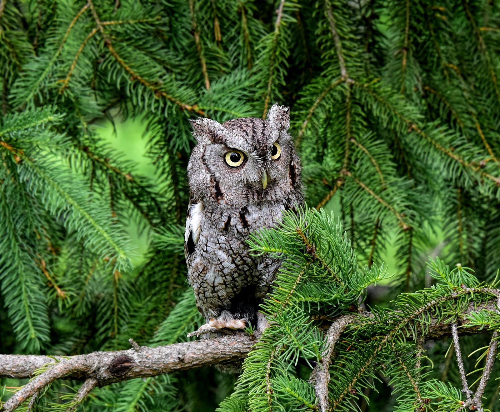 Eyes of the Forest --- Augen des Waldes --- Ojos del Bosque