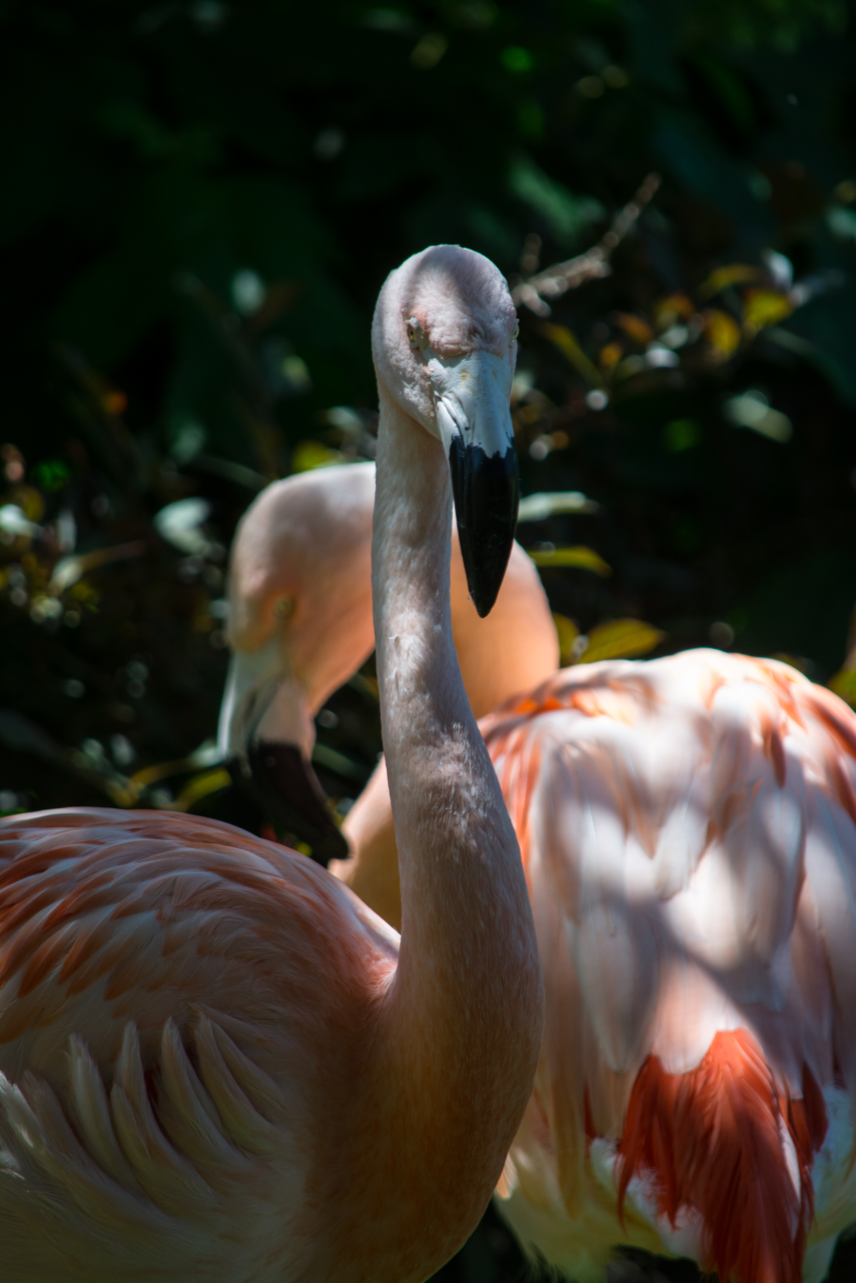 flamingo fancy - Cleveland Zoo