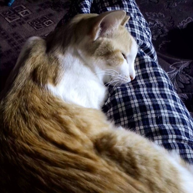 warm_cat