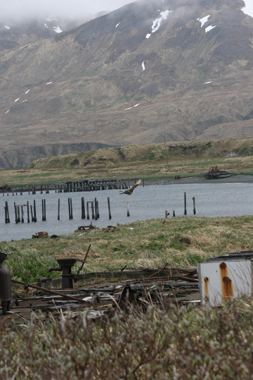 Attu Island, Alaska. Photo taken on June 5, 2005.