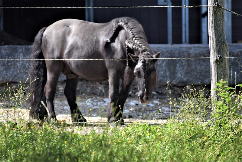 Horse 02.06 (1)