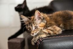 Kitten mania