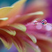 Soft by Macro-photography