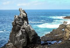 Punta Suarez, Española Island_2