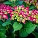 WPG Summer Flowers.