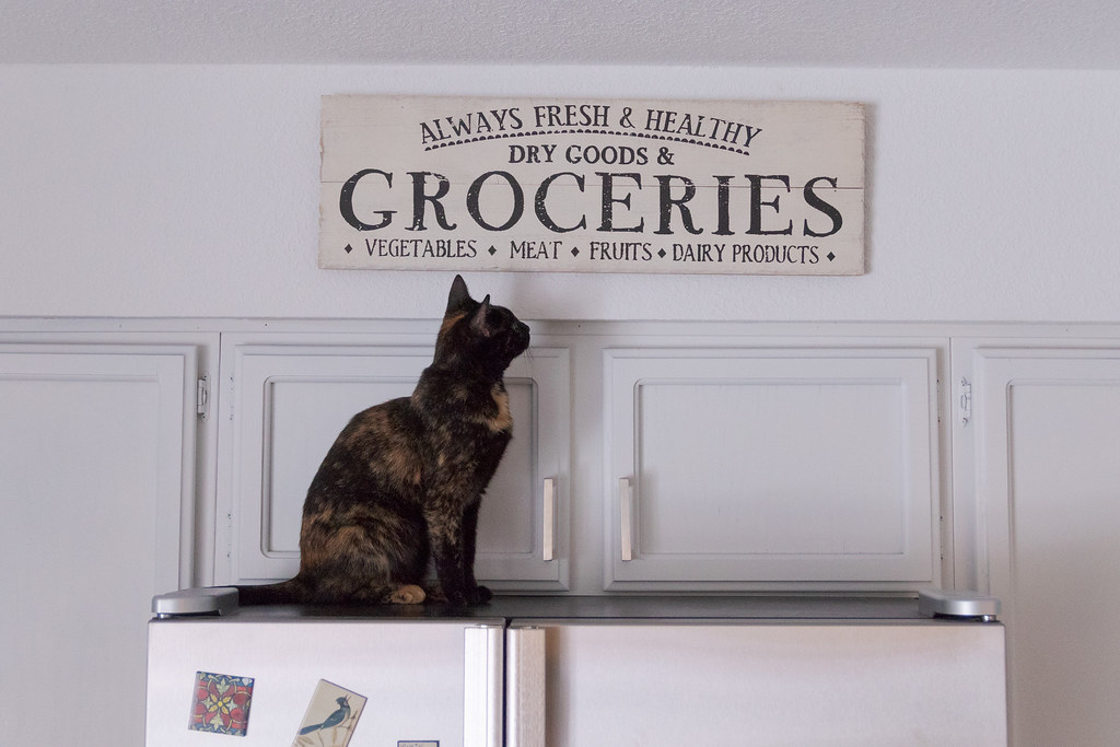 Our tortoiseshell cat Trixie sits on the refrigerator staring at a sign that says 'Dairy Products'
