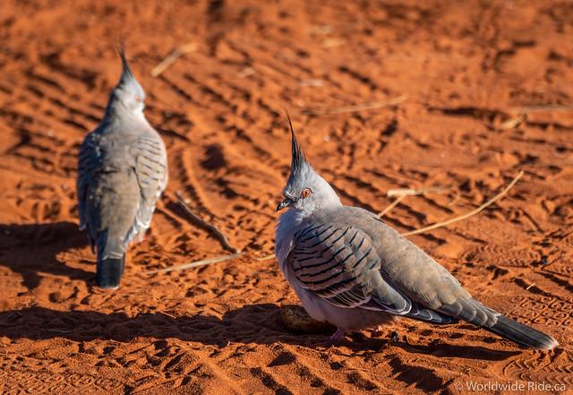 Uluru Australia-23