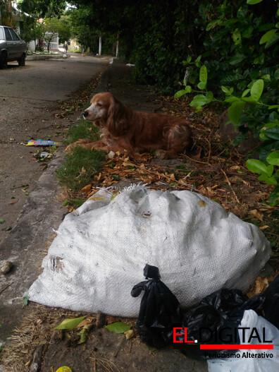 Animales callejeros en Neiva