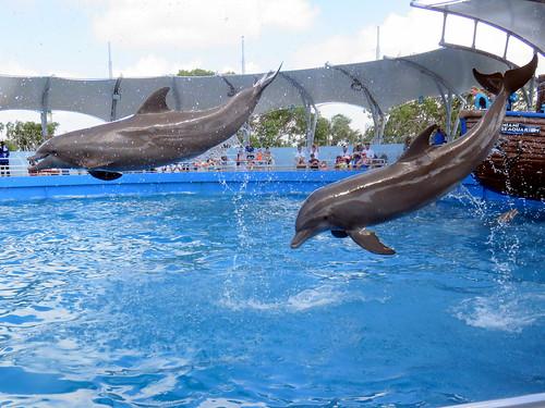 Seaquarium dolphins 09-20180604