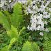 Azalea and ferns