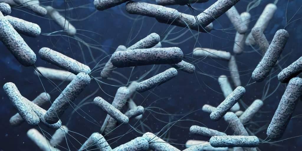 Des ingénieurs utilisent des microbes pour lutter contre le choléra