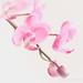 Orchid (159 June-8) 100x : 2018 Flowers & Plants - #58 by mmeastman