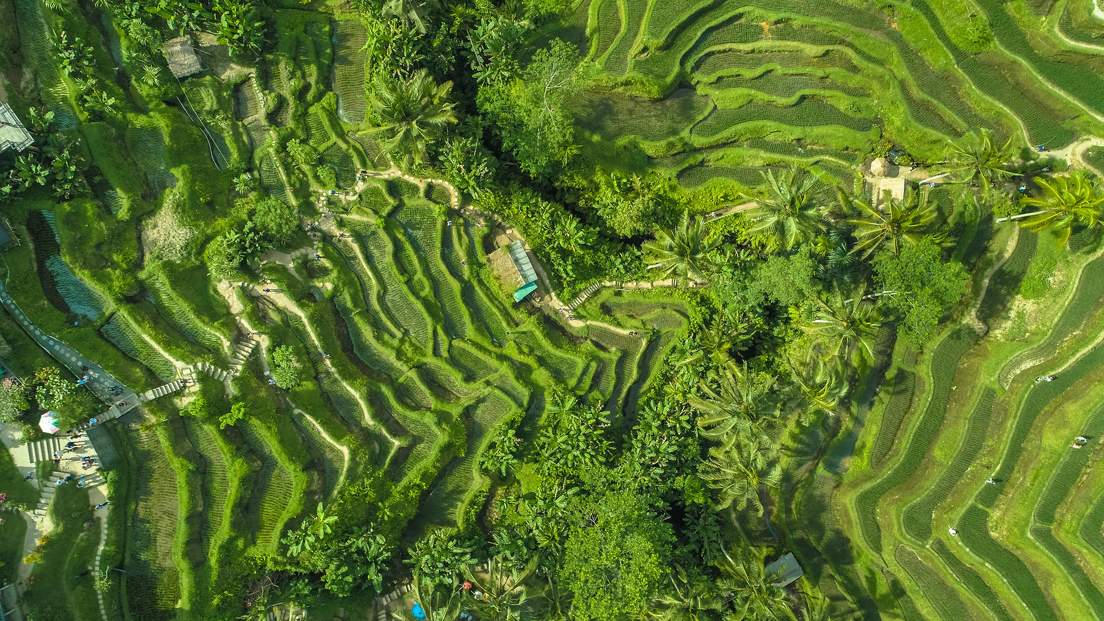 Tegalalang - Ubud - Bali drone production