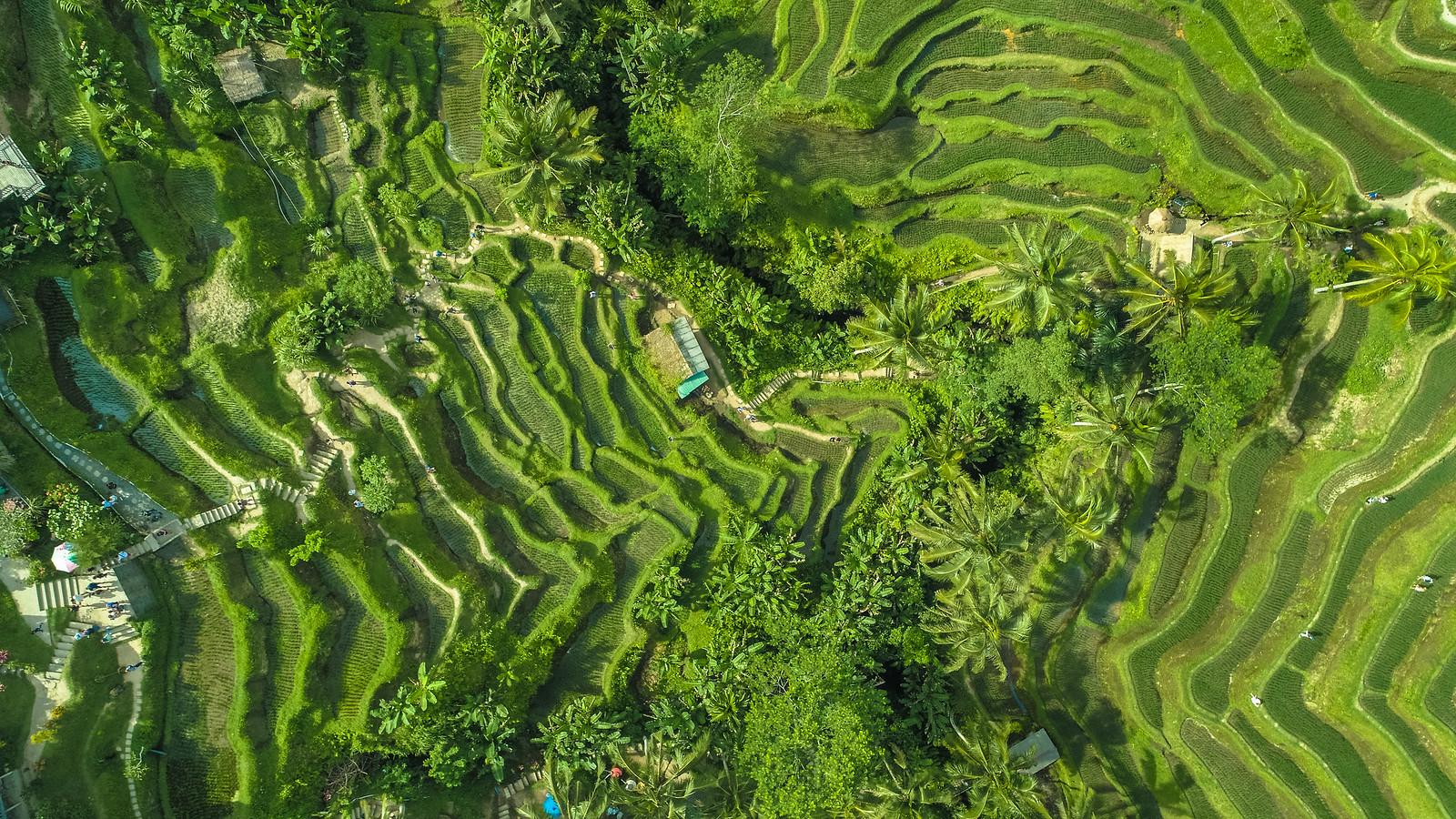 Tegalalang - Ubud - Bali drone production