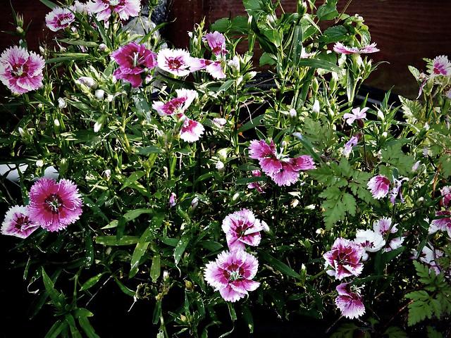 Flowers., Fujifilm FinePix HS50EXR