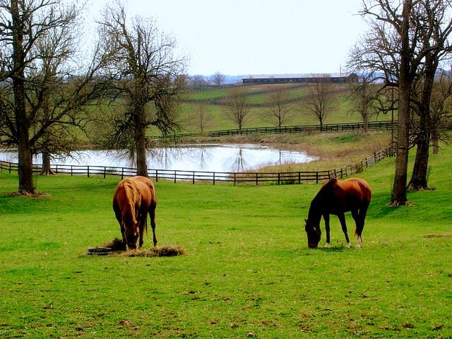 Kentucky's Inner Bluegrass region features hundreds of horse farms. Photo taken on March 27, 2007, south of Paris, Kentucky.