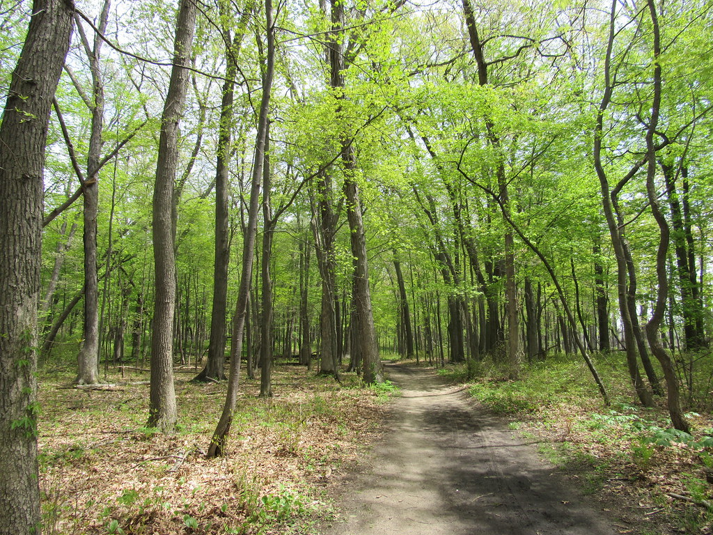 Forest- Indiana Dunes
