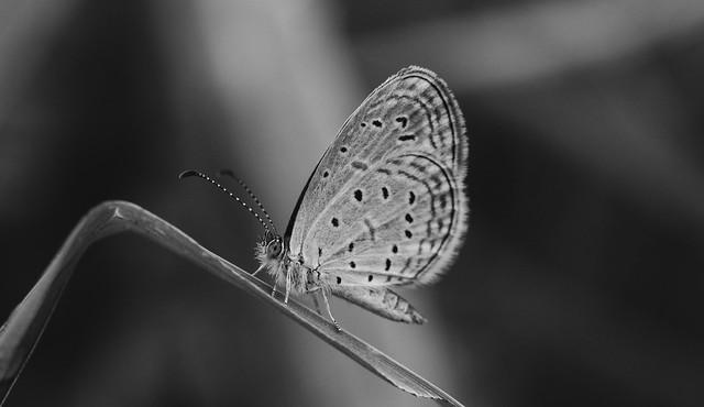 Butterfly, Fujifilm X-T20, XF18-55mmF2.8-4 R LM OIS
