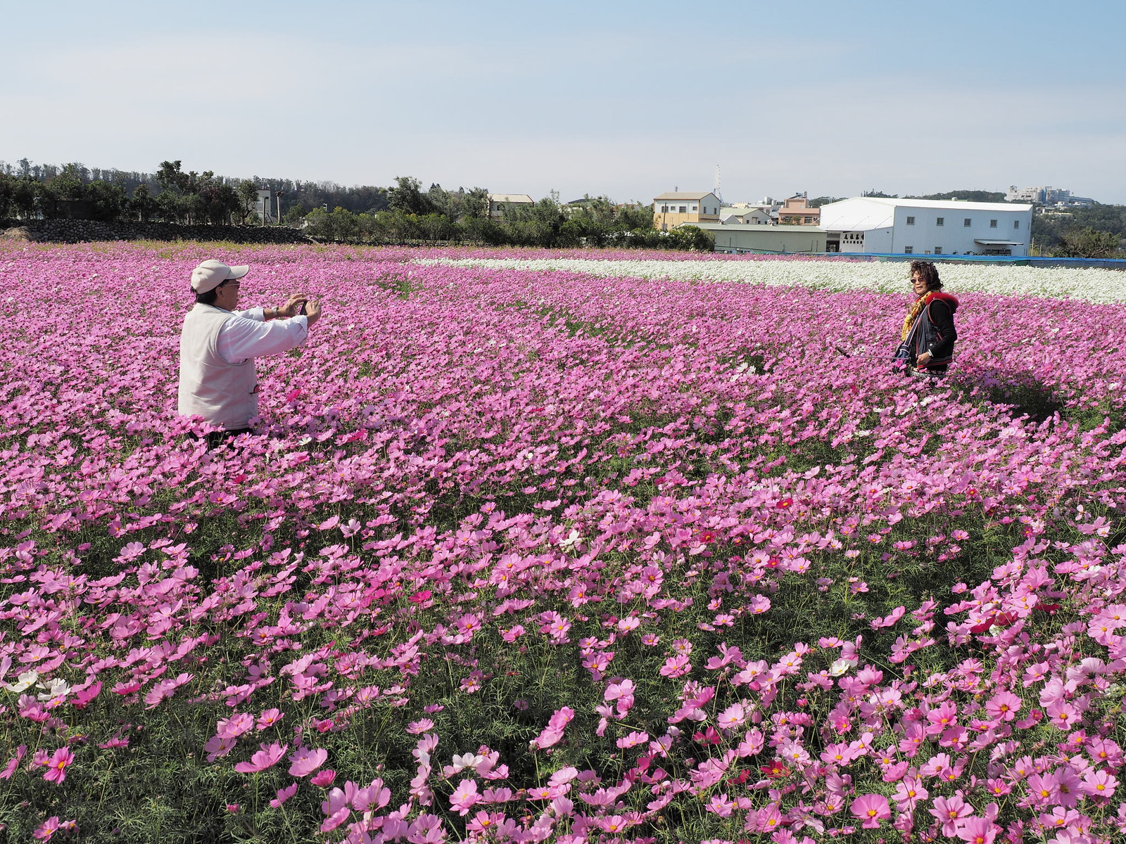 Tourists taking photos in the sea of flowers at Chungshe Flower Garden (中社觀光花市), Taichung, Taiwan.