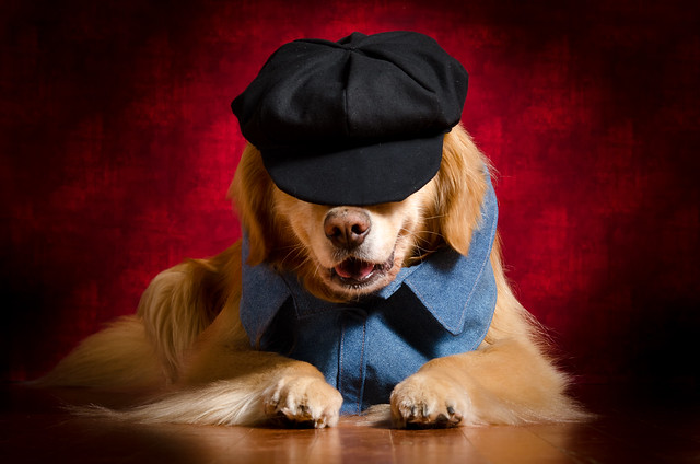 Newsdog?