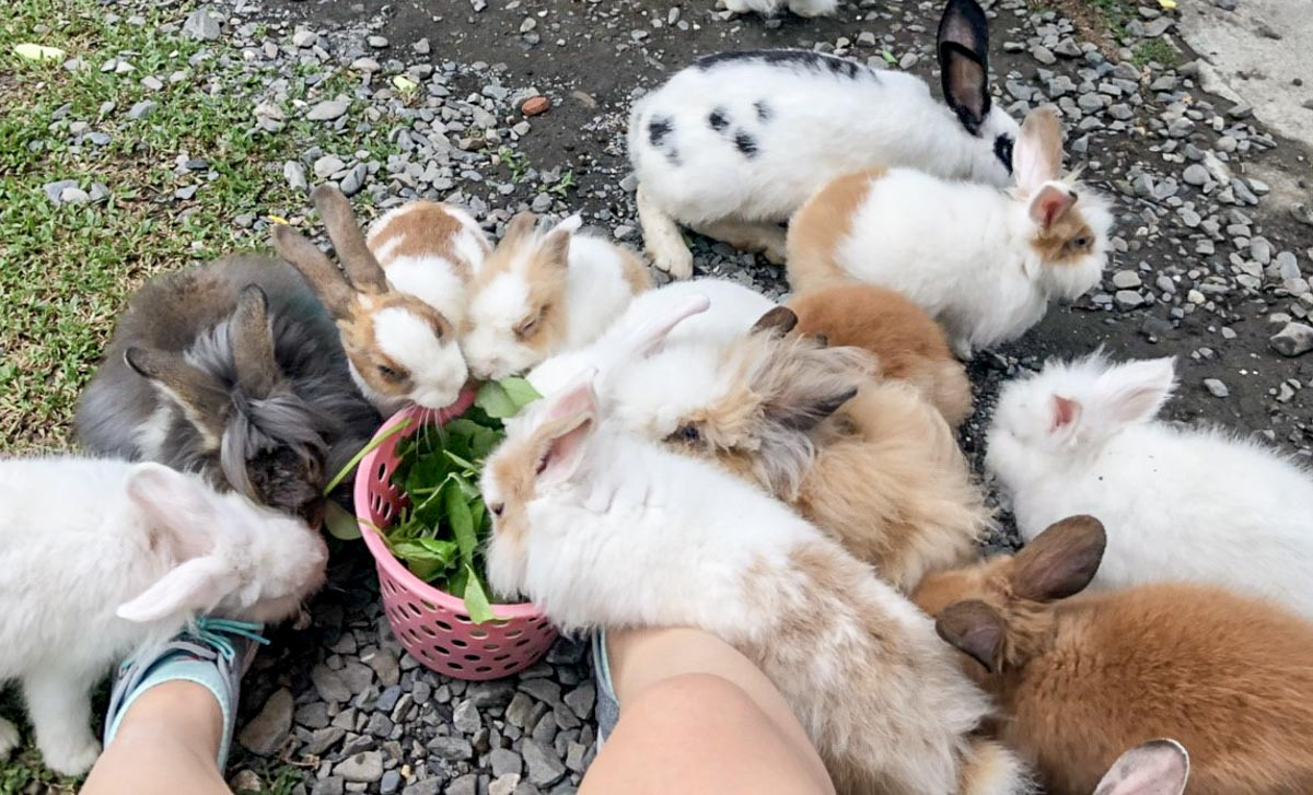 蕭家大院兔子寵物餐廳-9