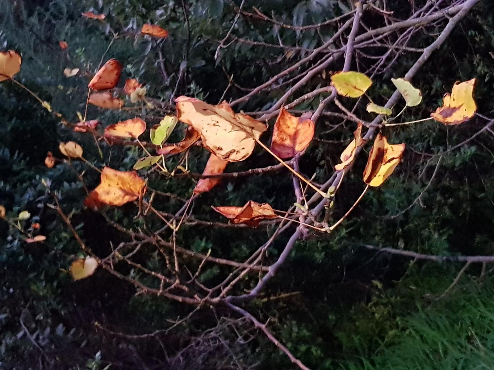 20180519_173139 (Autumn leaves, ephemeral)