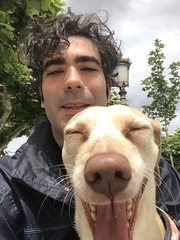 My #littleone is #bored of #selfies #dog #dachshund #mixedbreed #yawn #stress #walking mi #pequeña está #cansada de los selfies #perro #ginger #gingerdog #bostezo #estres #teckel #longback #dogofinstagram