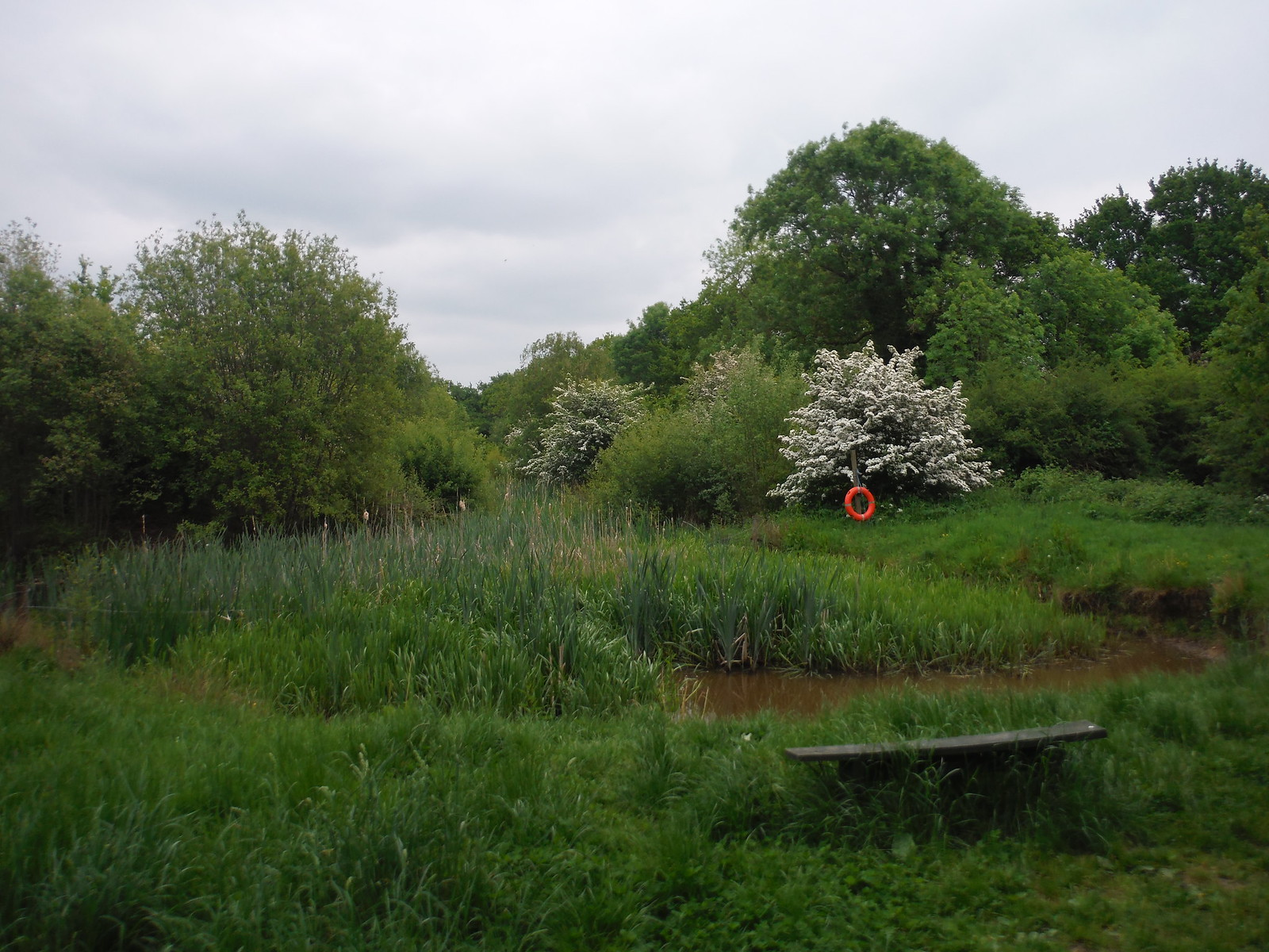 In Crowsheath Community Woodland SWC Walk 158 - Ingatestone to Battlesbridge or Wickford