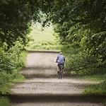 20180527-143233 Fahrrad Sandweg Wald - Schleswig-Holstein - Deutschland
