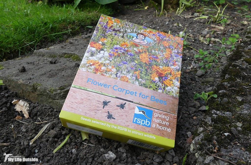 P1150587 - Wildlflower Meadow in progress