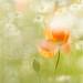 a meadow in June......... by Brigitte Lorenz