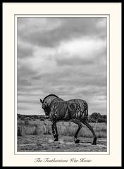 Featherstone War Horse-2294296.jpg