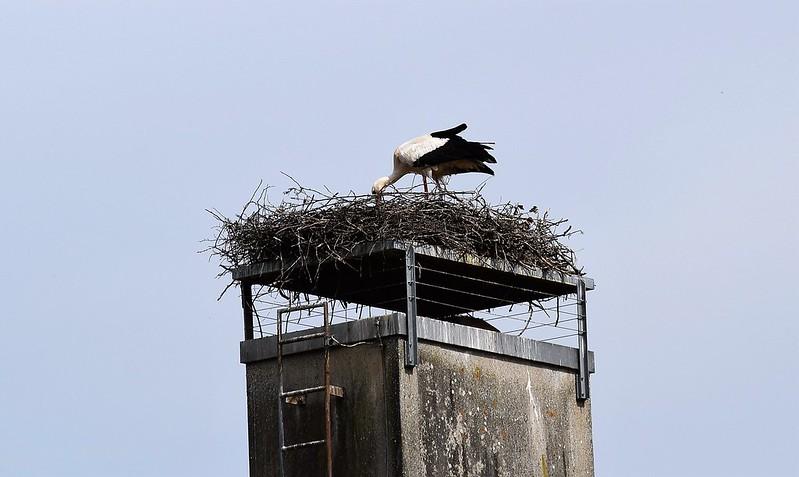 Stork 26.05 (5)
