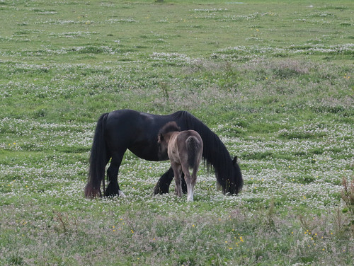 Growing foal