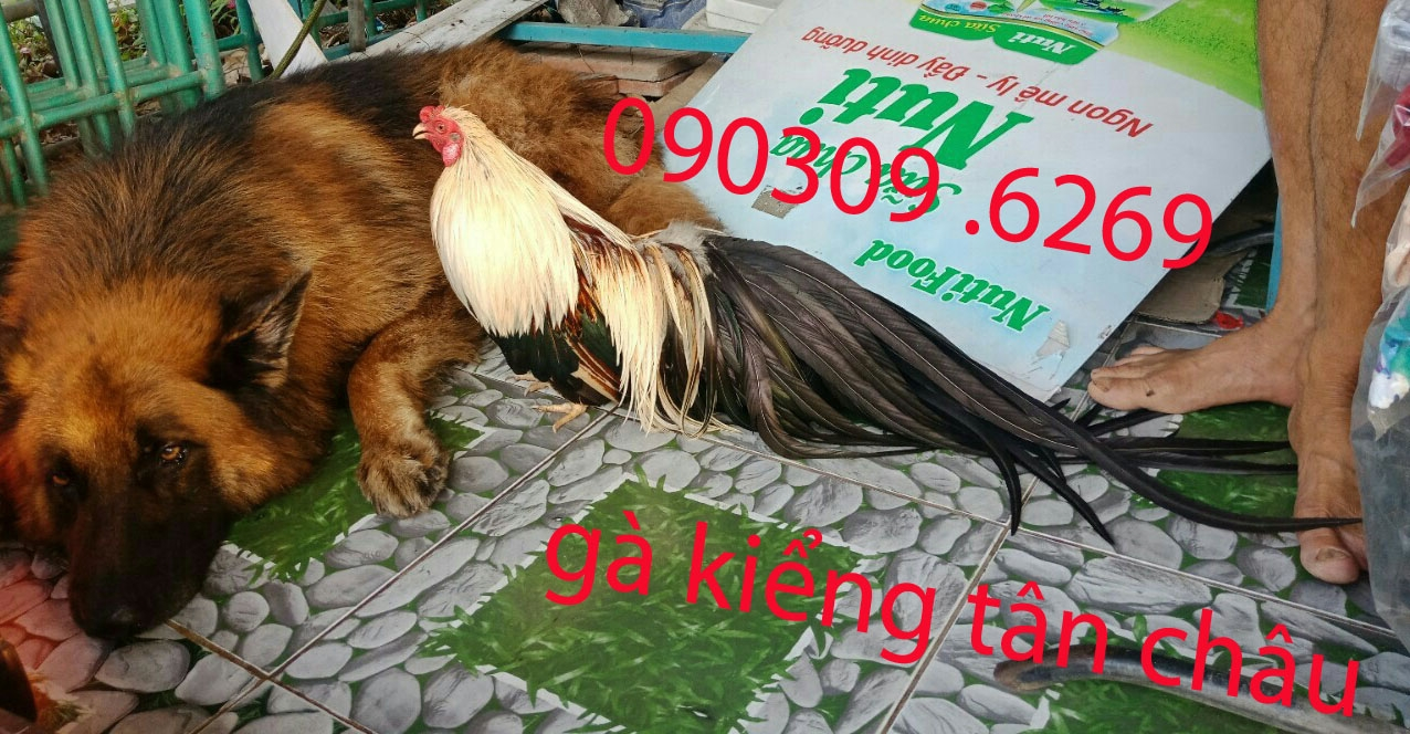 40975921750_2ddce40fcd_o.jpg