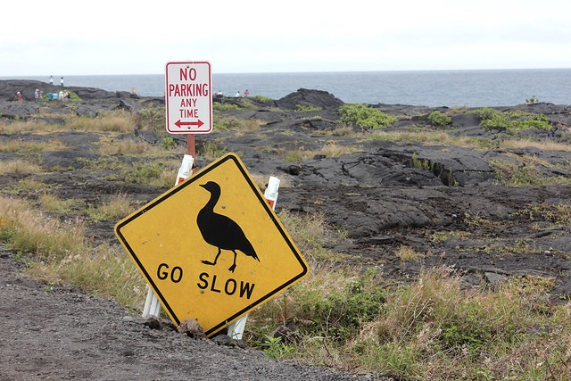 Go-Slow-Bird-Crossing-Sign-Big-Island-Hawaii-Unseen-Side-of-Hawaii
