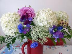 Cut flowers Hydrangea Annabelle 07-15  ADJ