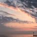 Stray Sunrise